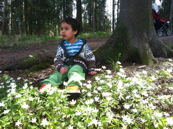 Di hutan kecil di dekat rumah