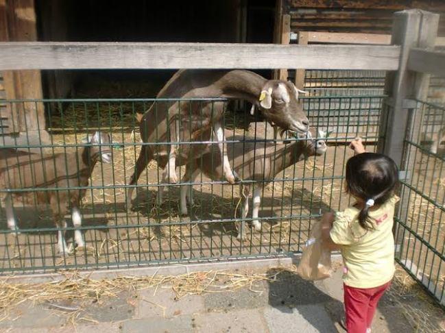 Di kebun binatang ini kita bisa memberi makan dan memegang binatang yang ada