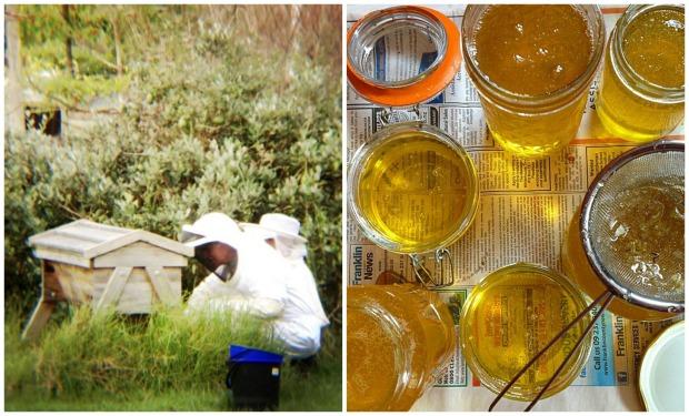 Beekeping dan hasil madu untuk supply beberapa bulan ke depan