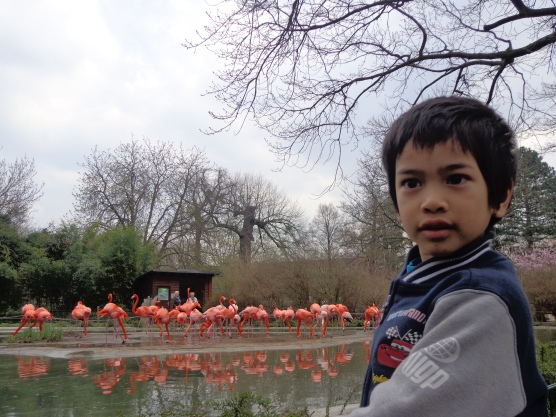 Adriaan dan flamingo di Zoodresden