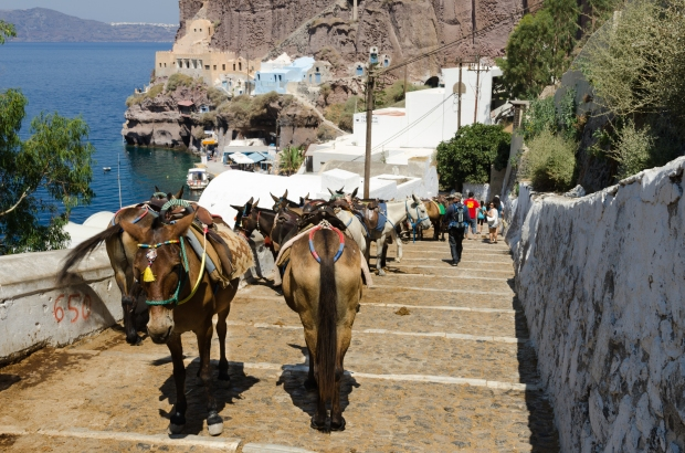 donkey_trail_-_fira_-_thira_-_to_mesa_gialos_port_-_santorini_-_greece_-_05