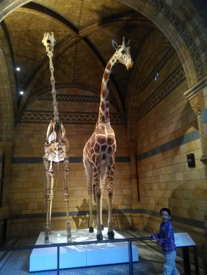 Di Natural History Museum